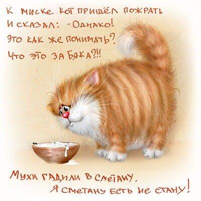 Прикольные стихи к подарку кошка 82