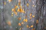 ноябрь уж на дворе