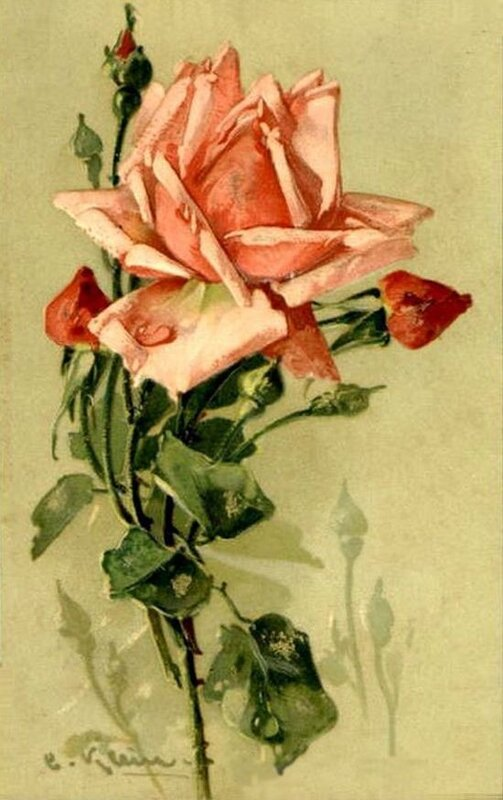 К. Кляйн.  202. Роза.