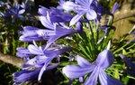 flower1_1600p.jpg