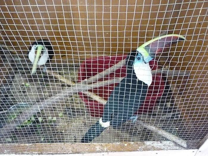 Зоовыставка во Владивостоке - какаду