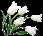 клипарт тюльпаны