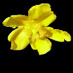 Жёлтые и оранжевые цветочки