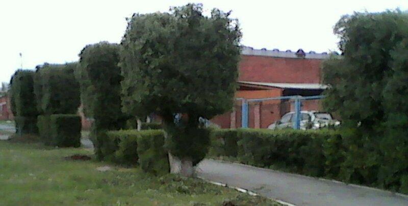 Омск стрижёт зелень