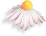 StrawberriesDesigns_TouchMyHeart_element_69.png