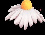 «TochMyHeart»  0_7d25e_e505aaec_S
