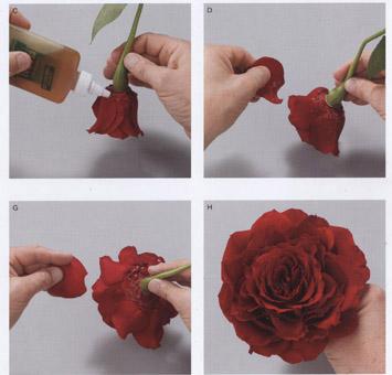 Из лепестков розы своими руками