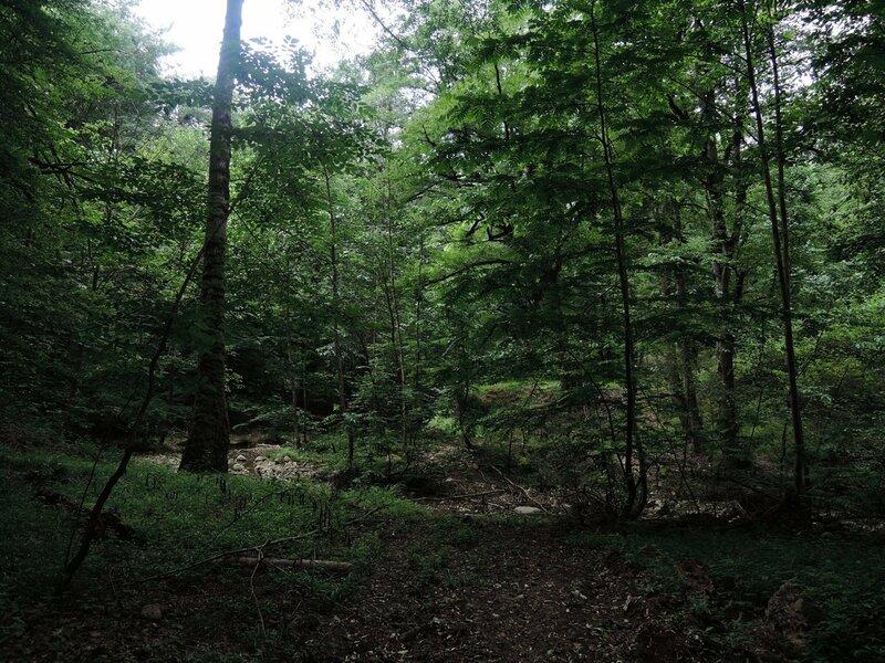 Иран, лес