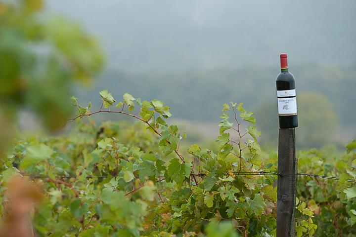 рекламная съемка для завода вин