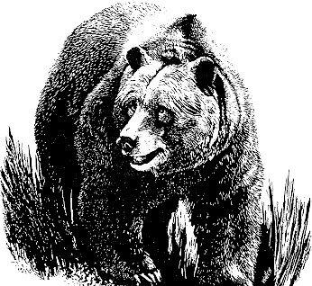 рисунок медведя