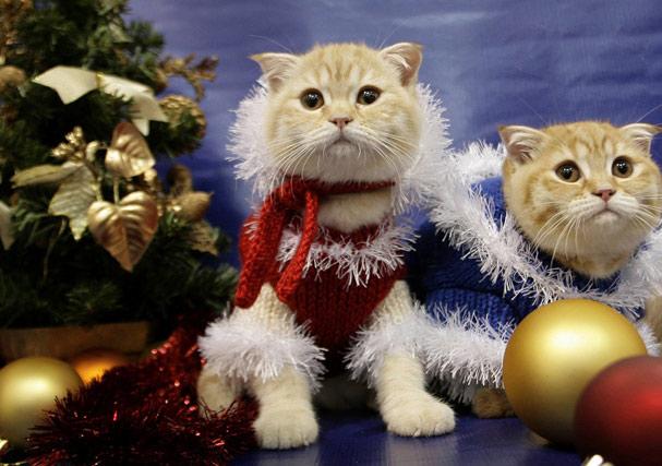 выставка кошек на Рождество