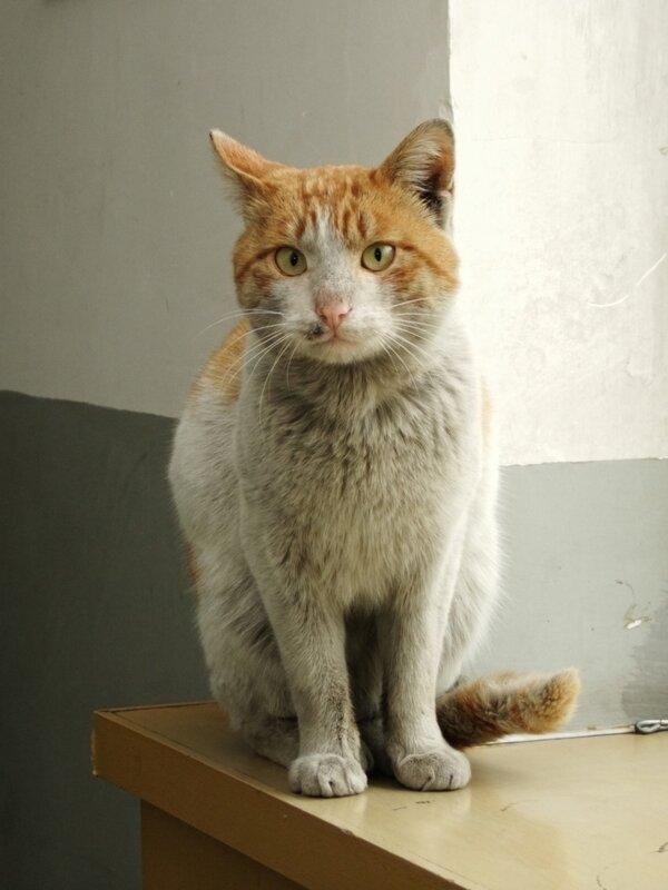 Полу-бездомный кот