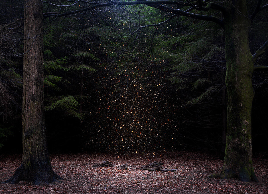 Into the woods, Ellie Davies0.jpg