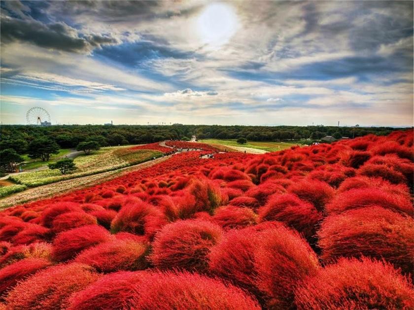 Живописный японский парк Хитати Кайхин 0 1422c7 9804d765 orig