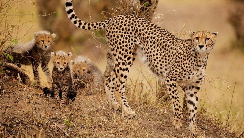 Лучшие фотографии конкурса National Geographic Photo Contest 2015 0 14e59f 108c03b7 XL