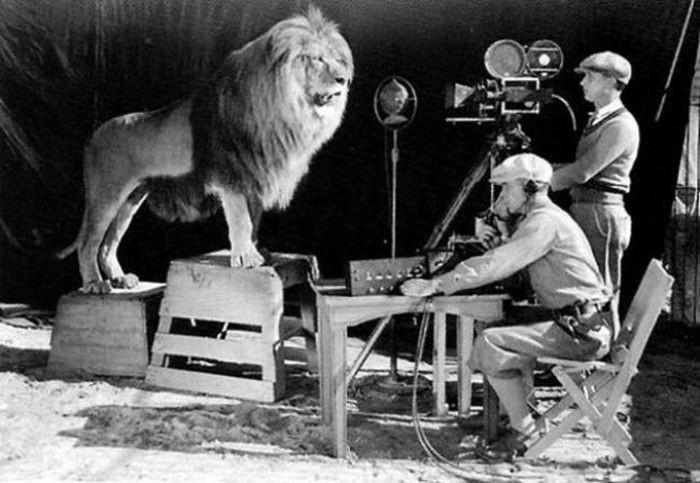 Съемки легендарной заставки Metro-Goldwyn-Mayer.