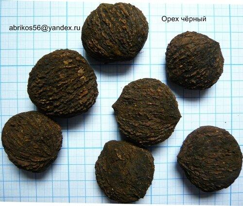 Настойка маньчжурского ореха: как приготовить и рецепты 68