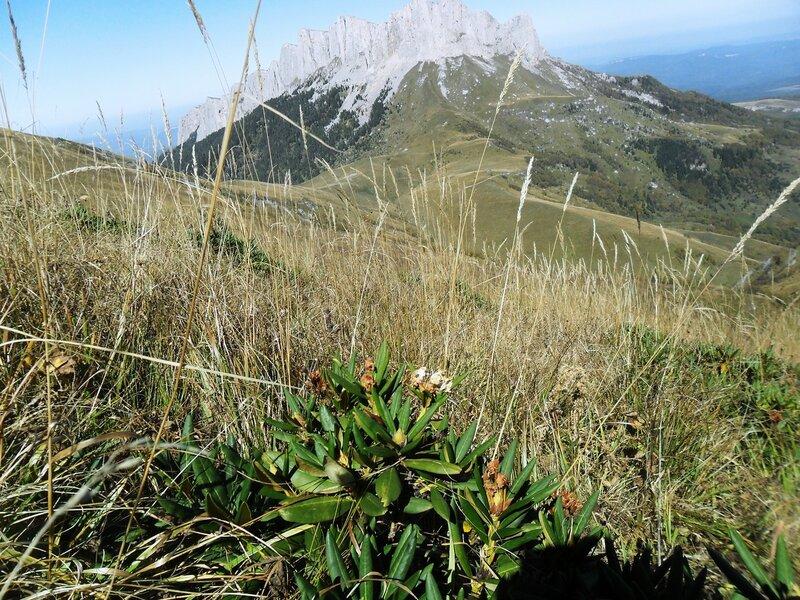 В мире растительном гор ... SAM_3342.JPG