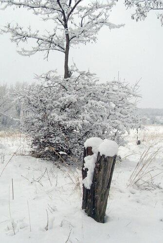 Снег на пеньке