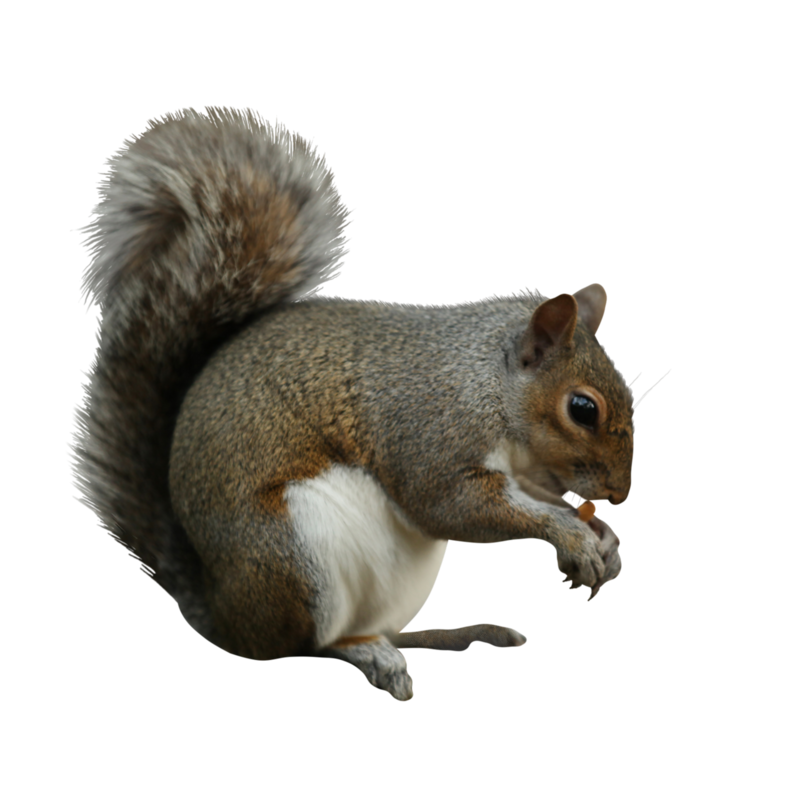 mzimm_snowflurries_squirrel.png