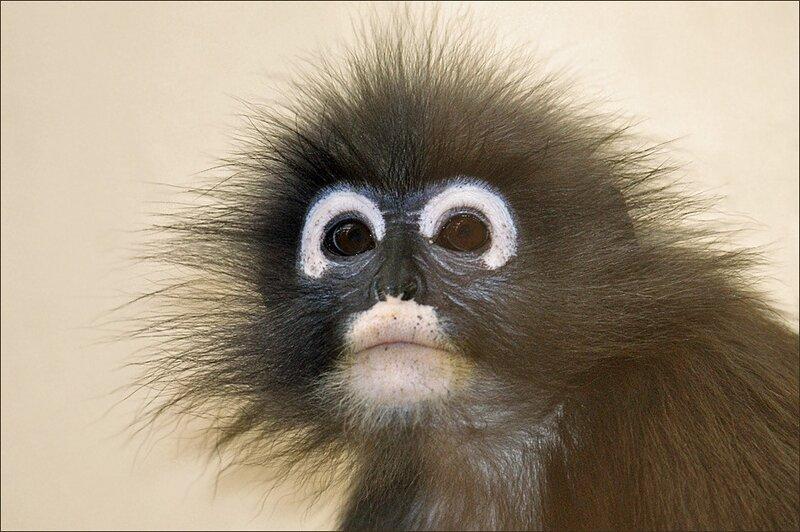 древесная обезьянка