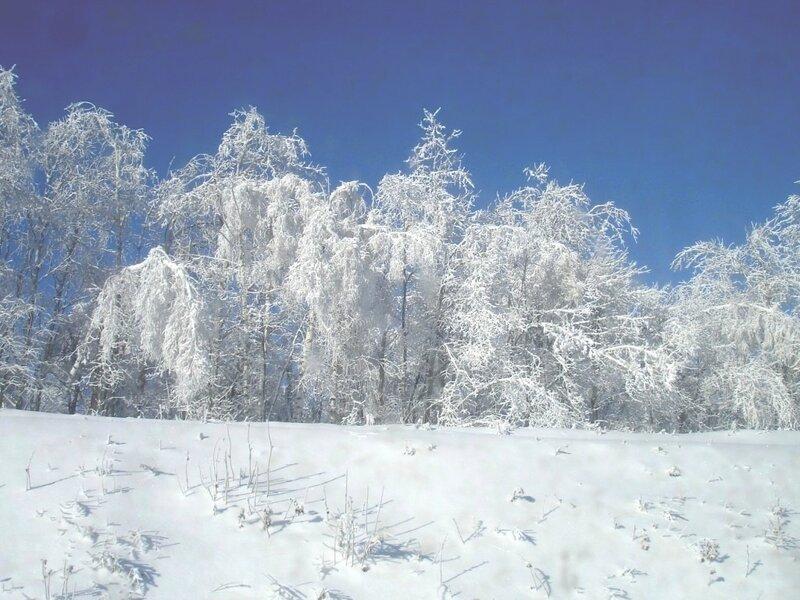 Красавица зима!