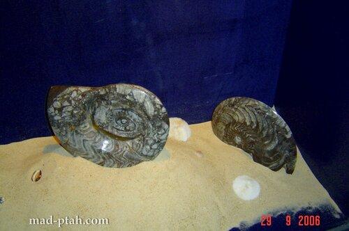 музей ракушек, эскпонаты, хайнань, китай