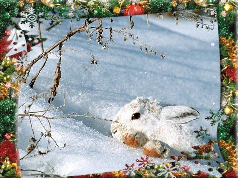 Зайцы-Кролики.