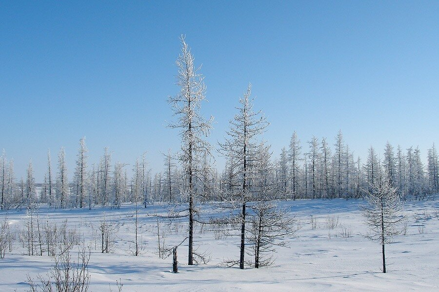 Тундра зима