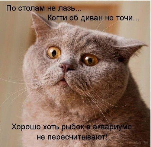 http://img-fotki.yandex.ru/get/5602/posmetnaia-el.c3/0_46c6f_8f8ac933_L.JPEG