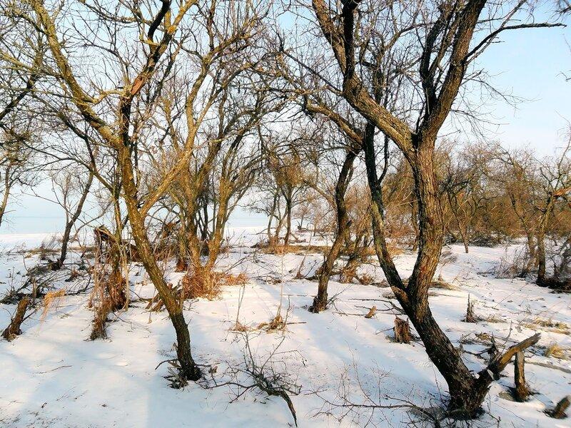 На Природе, январь 2011