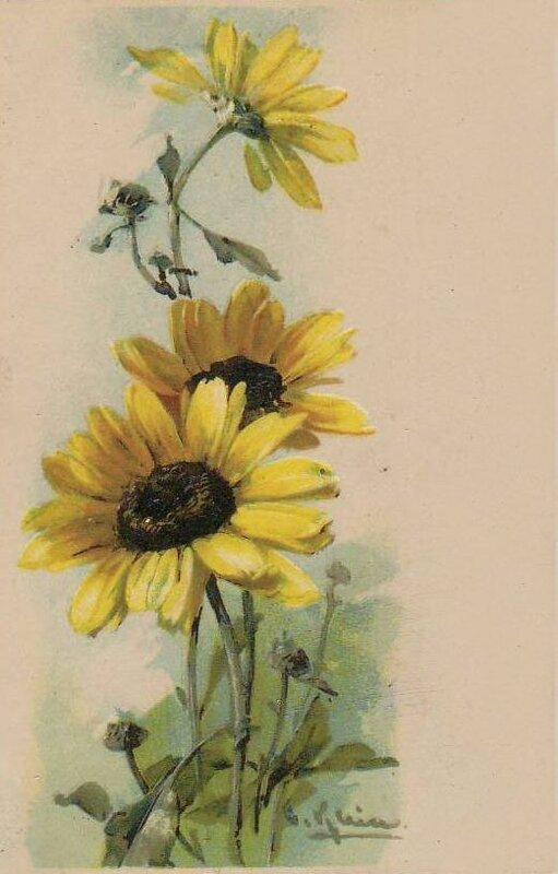 Подсолнухи старинные открытки