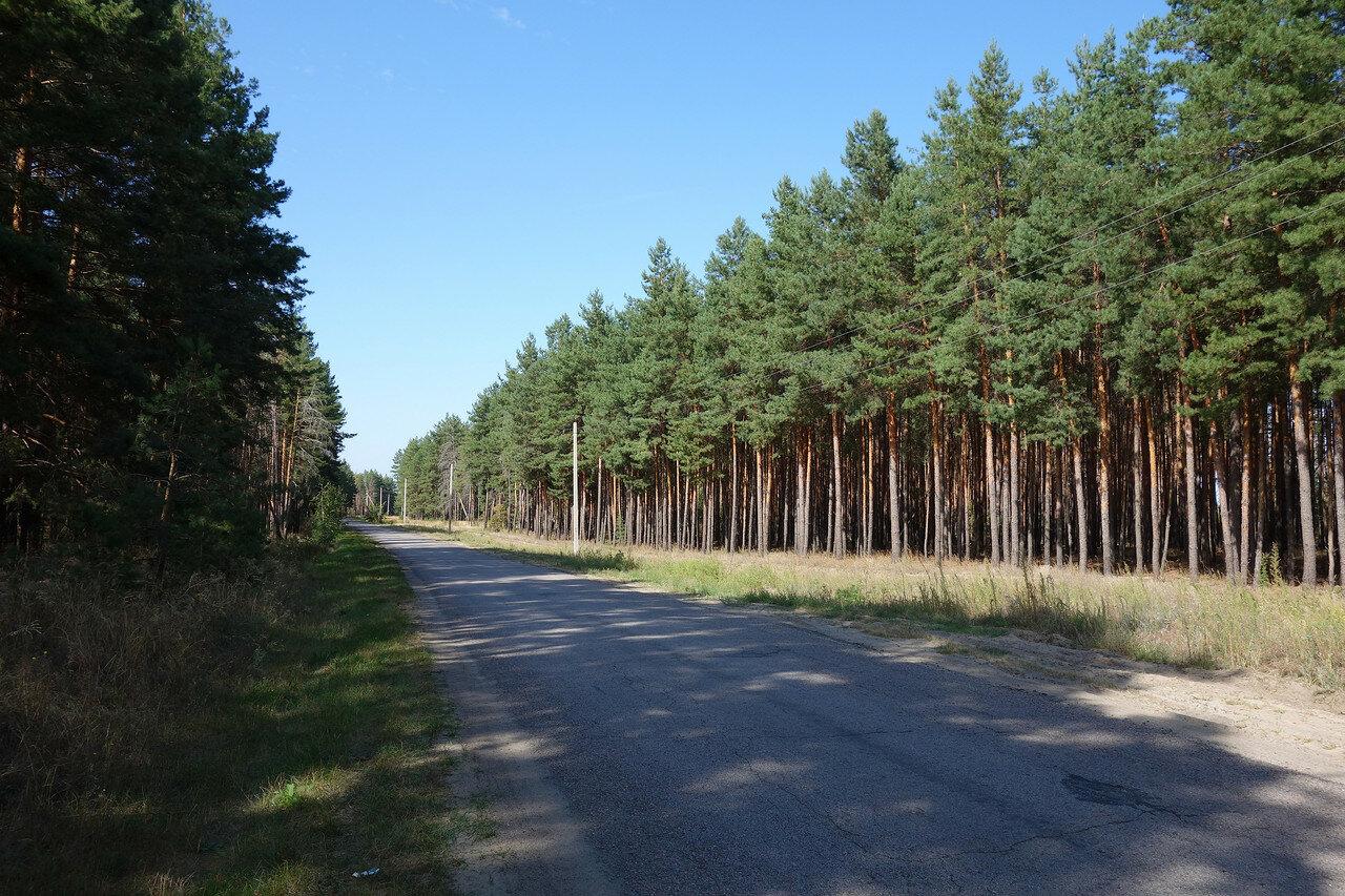 лесопосадки укрепительные