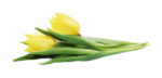 Lily_Spring_el25.png
