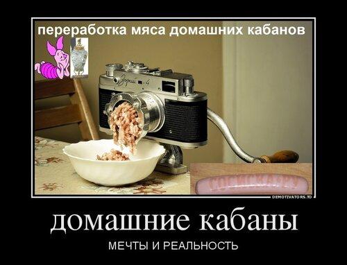 462880_domashnie-kabanyi_demotivators_to (1).jpg