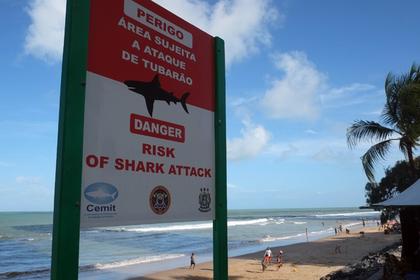 Австралийская школьница своим криком спугнула акулу