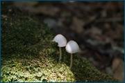 http://img-fotki.yandex.ru/get/5603/15842935.140/0_d092c_8c7fc4bb_orig.jpg