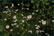 http://img-fotki.yandex.ru/get/5603/15842935.f8/0_ce7b0_f64551cf_orig.jpg