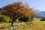 В долине Теберда