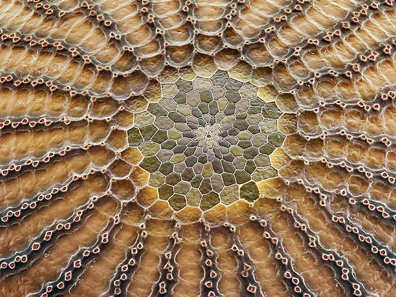 3. Яйцо бабочки калиго Мозаичный узор на яйце бабочки калиго похож на космическую посадочную площадк
