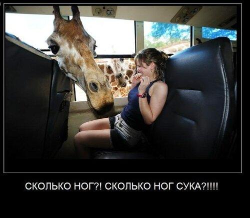 жираф сколько ног