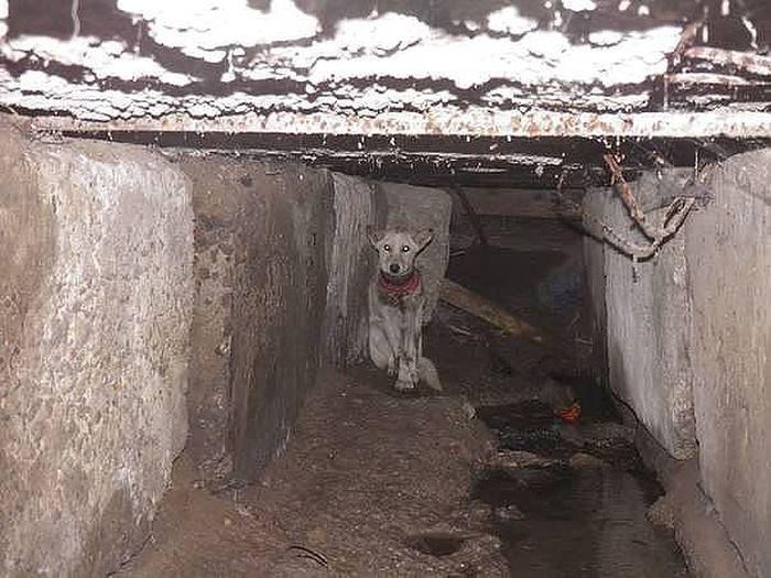 Как спасали собаку по кличке Баночка