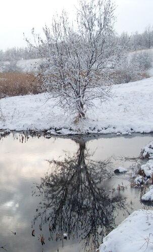 Дерево. Отражение в воде.
