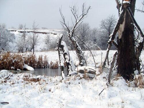 Зима, старые деревья