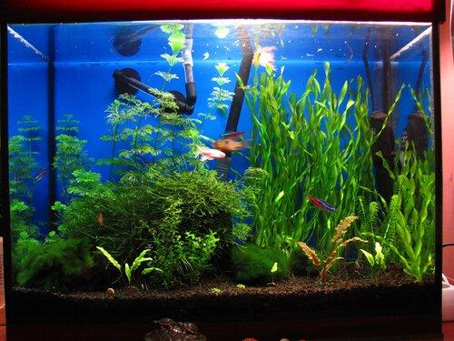 Мой аквариум через 2 года