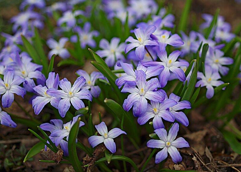 Здравствуйте, солнышки ясные, Очи весны всепрекрасные,