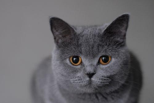Окрасы при которых все тело кошки