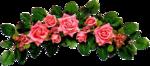 rosenrosa040.png