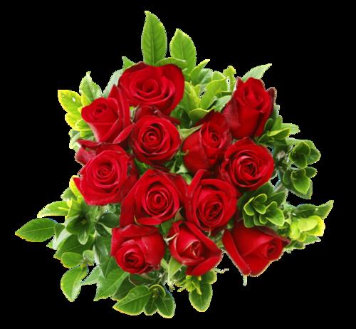 【转载】【免抠PNG素材篇】送你一束玫瑰花 - 自我陶醉 - 蓝孔雀
