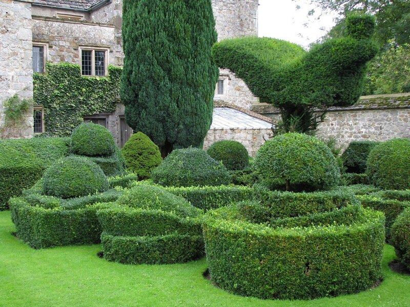 имя стрижка растений в саду фото как выбирать мужской